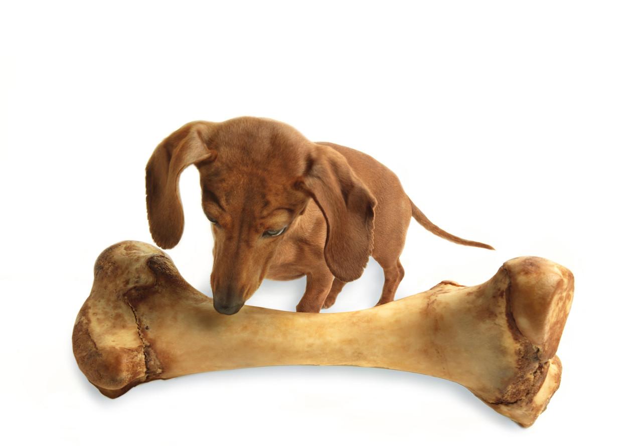 Dog Bones Reviews